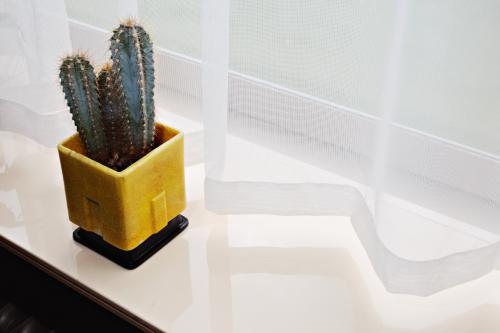 A.D. Copier. Square cactus pot. Photo: Johannes Schwartz